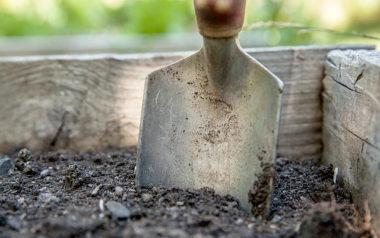 humus, kompost, komposterde, hochbeet, bepflanzen, unterschied