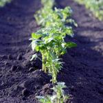 komposterde,kompost,garten,pflanzen,boden