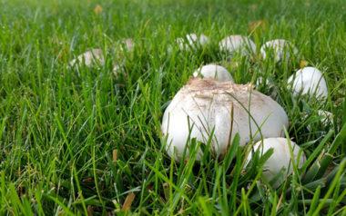 pilze,pilz,rasen,komposterde,wachsen